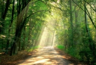 Privatne šume, što učiniti s njima?
