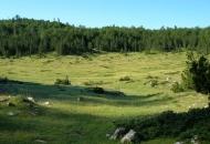 Još o privatnim šumama