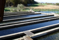 Potpore za ulaganja u akvakulturu