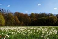 Ekološki značajne površine - što je to?