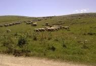 Trajni travnjaci i trajni pašnjaci, što i kako s njima?
