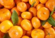 Kako po povoljnoj cijeni do neretvanskih mandarina