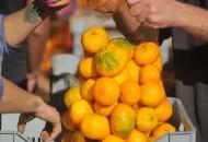 Mandarine planule jučer u Otočcu