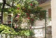 Procvjetale senjske ruže