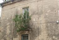 Drvo raste iz fasade