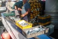 Plavice i inćuni na senjskoj rivi