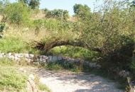 Nebriga za srušeno stablo