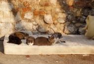 Mace na sunčanju