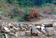 Šumske krađe u Krivom putu