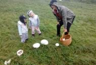 Kiša pogoduje gljivama...