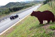 Automobilom udario medvjeda na kolniku kod Selina - Senj