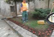 Cvjetno uređenje grada