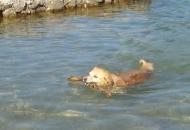 Kako sa psom na plažu