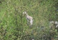 Uginuli janjčić - na drvetu
