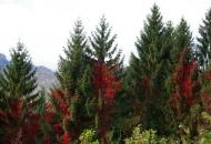 Posjekao 12 stabala bjelogorice