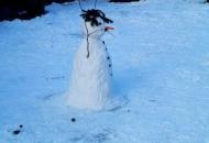 Krasno - druženje na snijegu