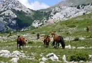 Mogu li zaštita prirode i seljaci zajedno?