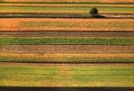 Uskoro potpore u poljoprivredi - podmjera 4.1. i 4.2.