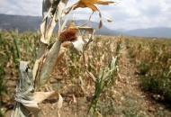 Može se zatražiti potpora za osiguranje od šteta u poljoprivredi