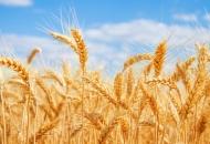 Podnošenje zahtjeva za plaćanje u poljoprivredi pokamnuto za sredinu ožujka