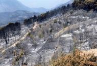 Raspisivanje novog natječaja zbog požara i suše