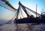 Elektroničko ispunjavanje obrazaca u ribarstvu