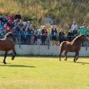 Održana smotra konja u Krivomu Putu
