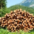 Šumska krađa u Lipovlju