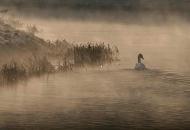 Kud plovi ovaj labud ...