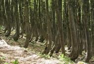 Hrvatske bukove šume - na popis svjetske baštine