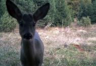 Životinjski selfiji u NP Plitvička jezera?
