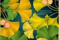Tjedan botaničkih vrtova - Park prirode Velebit