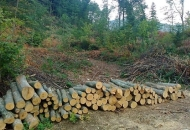 Krađa 48 stabala bukve u šumskom predjelu Krivog Puta