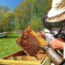 Europska nagrada za najboljeg pčelara