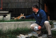 Praktična lisica