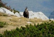Najava poziva za dostavu projektnih prijedloga održivoga korištenja prirodne baštine
