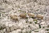 18. savjetovanje i 17. izložba hrvatskih ovčjih i kozjih sireva