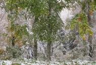 UNESCO-va evaluacija bukovih šuma u NP Sjeverni Velebit