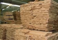 Novi poslovni vjetrovi iz Hrvatskih šuma