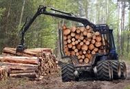 Javni poziv Hrvatskih šuma za kupnju trupaca