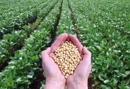 Što smo i koliko smo sami u poljoprivredi proizveli lanjske godine?