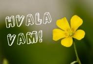 HDZ Novalja: Građani Grada Novalje poslali su jasnu poruku