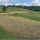 Prve isplate općinama za ruralni razvoj