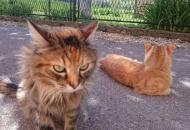 Porez na - mačku