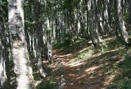 Bukove šume na popisu svjetske baštine UNESCO-a