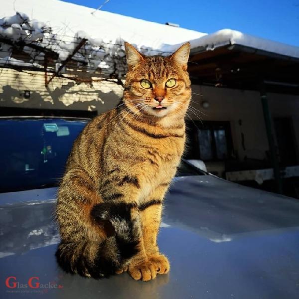 Velika opasnost se nadvila nad mačji i pasji svijet