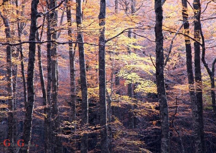 Produljen rok za zakup šumskog zemljišta