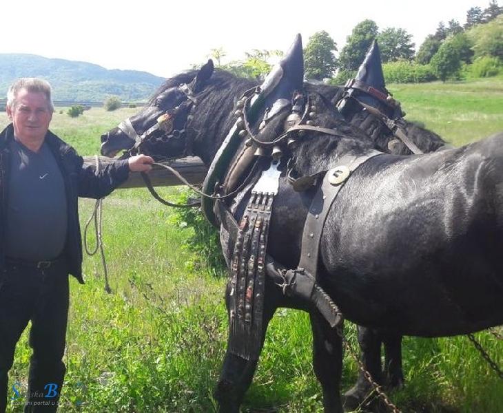 Smotra konja u Krivom putu