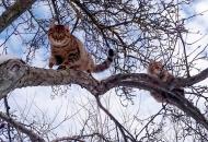 Mačje valentinovo i mačja prava