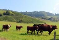 Natječaj za mlade poljoprivrednike - od 25. travnja do 13. lipnja